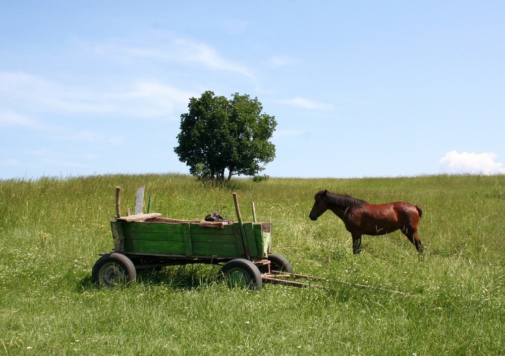 Why you should put the cart ahead of the horse